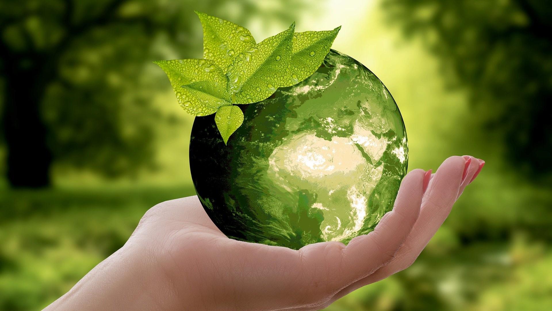 фотографии на тему окружающая среда каждом историческом регионе