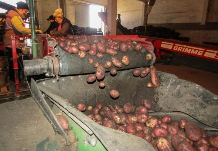 Выращивание картофеля – дело хлопотное