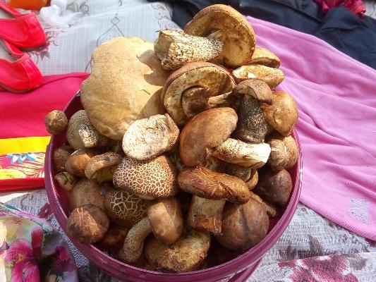 В Пензенской области начался грибной сезон