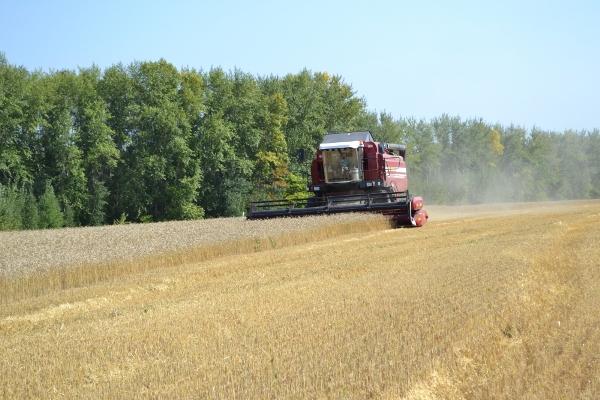 Краснодарский край планирует экспортировать около 5,8 млн тонн зерна нового урожая