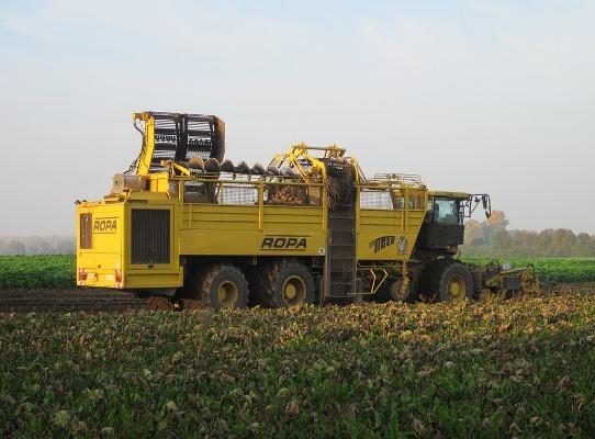 Пензенские аграрии собрали неменее 1 млн тонн сладкой свеклы